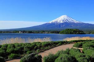 河口湖畔の大石公園から望む富士山の写真素材 [FYI01794602]
