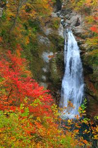 秋保大滝の紅葉の写真素材 [FYI01794611]