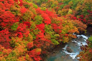 松川渓谷の紅葉の写真素材 [FYI01794613]