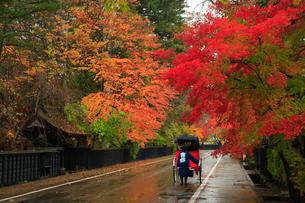 角館の武家屋敷と紅葉に人力車の写真素材 [FYI01794628]