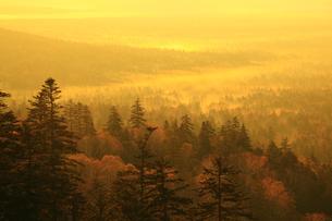 三国峠から望む紅葉と朝焼けの雲海の写真素材 [FYI01794633]