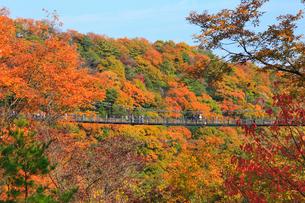 大阪府民の森・星田園地 星のブランコと紅葉の写真素材 [FYI01794732]