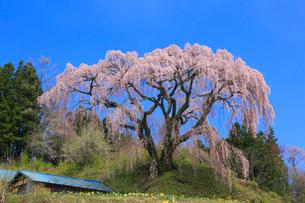 芹ヶ沢桜の写真素材 [FYI01794735]