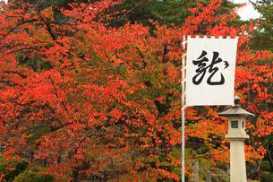 上杉神社の紅葉の写真素材 [FYI01794791]