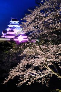 鶴ヶ城とサクラのライトアップ夜景の写真素材 [FYI01794852]