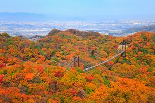 大阪府民の森・星田園地 星のブランコと紅葉の写真素材 [FYI01794867]