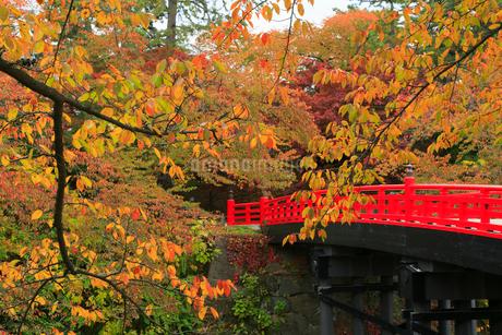 弘前公園のサクラ紅葉の写真素材 [FYI01794882]