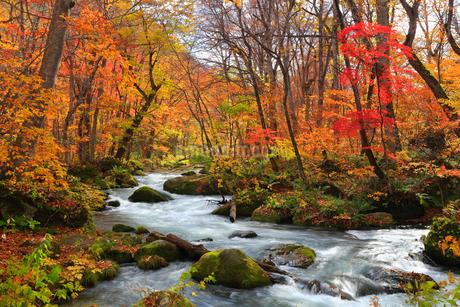 奥入瀬渓流の紅葉の写真素材 [FYI01794928]