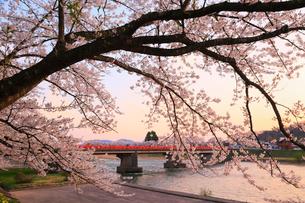 角館 夕日に染まる桧木内川堤のサクラ並木の写真素材 [FYI01794970]
