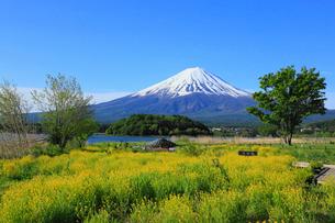 河口湖畔の大石公園から望む富士山の写真素材 [FYI01794978]