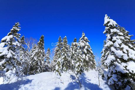 千石園地の雪の回廊から望む雪景色の樹林の写真素材 [FYI01795005]