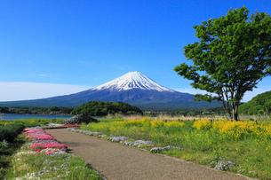 河口湖畔の大石公園から望む富士山の写真素材 [FYI01795016]