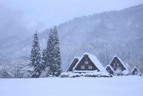 雪景色の白川郷・上町地区の写真素材 [FYI01795023]