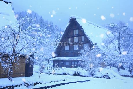 雪景色の白川郷 明善寺の庫裡の写真素材 [FYI01795062]