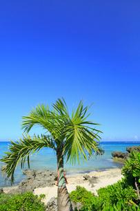与論島 大金久海岸のシーマンズビーチの写真素材 [FYI01795088]
