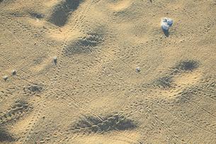 与論島 前浜海岸・ヤドカリの足跡の写真素材 [FYI01795136]