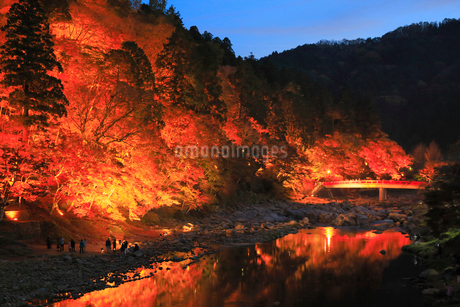 香嵐渓の紅葉 ライトアップ夜景の写真素材 [FYI01795169]