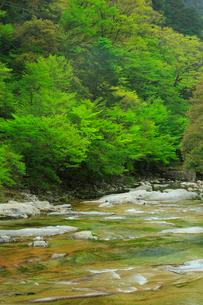 面河渓の五色河原の写真素材 [FYI01795182]