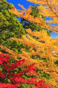 高野山の紅葉 の写真素材 [FYI01795191]