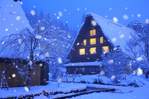 雪景色の白川郷 明善寺の庫裡の夜景の写真素材 [FYI01795196]
