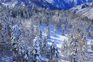 西穂高口駅屋上展望台から望む雪景色の樹林帯の写真素材 [FYI01795239]