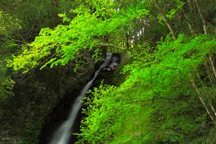 祖谷渓 琵琶の滝の写真素材 [FYI01795276]