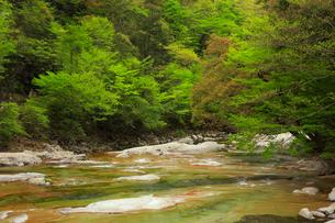 面河渓の五色河原の写真素材 [FYI01795514]