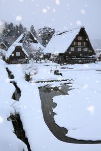 雪景色の白川郷 明善寺の庫裡の写真素材 [FYI01795557]