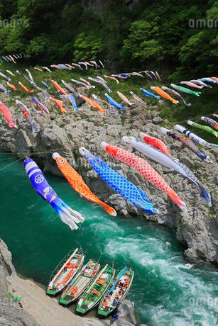 大歩危峡と鯉のぼりの写真素材 [FYI01795593]