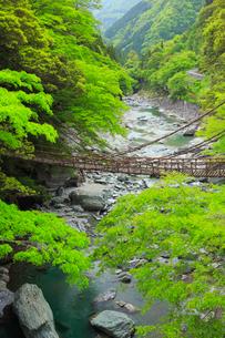 祖谷渓 祖谷のかずら橋の写真素材 [FYI01795604]
