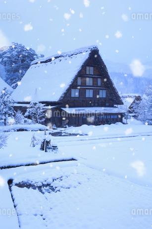 雪景色の白川郷 明善寺の庫裡の写真素材 [FYI01795612]