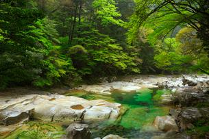 面河渓の紅葉河原の写真素材 [FYI01795682]