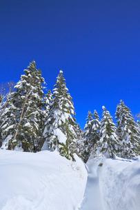 千石園地の雪の回廊から望む雪景色の樹林の写真素材 [FYI01795771]