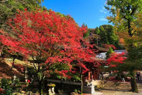 定光寺公園の紅葉の写真素材 [FYI01795790]