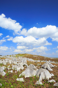 四国カルストの天狗高原の写真素材 [FYI01795803]