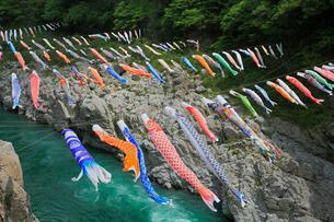大歩危峡と鯉のぼりの写真素材 [FYI01795813]