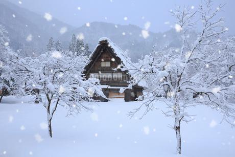 雪景色の白川郷 野外博物館・合掌造り民家園の写真素材 [FYI01795819]