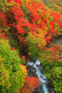 松川渓谷の紅葉の写真素材 [FYI01795837]
