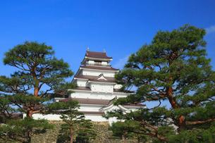 鶴ヶ城と松の木の写真素材 [FYI01795878]