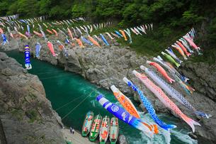 大歩危峡と鯉のぼりの写真素材 [FYI01795893]