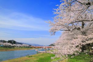 角館 桧木内川堤のサクラの写真素材 [FYI01795895]