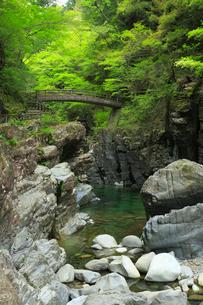 面河渓の関門遊歩道と空船橋の写真素材 [FYI01795966]