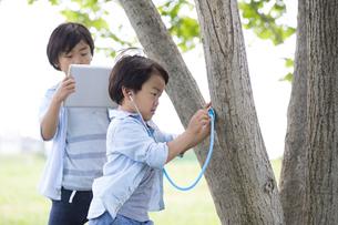 木に聴診器を当てて音を聞く弟とその様子をタブレットで記録する兄の写真素材 [FYI01796046]