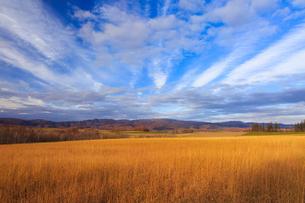 草紅葉染まる平原と放射状に広がる雲の写真素材 [FYI01796467]
