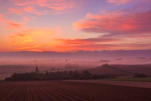 朝焼けと霧の立ちこもる美瑛の丘の写真素材 [FYI01796496]