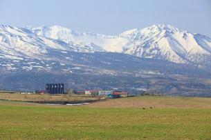 白金模範牧場の春の写真素材 [FYI01796515]