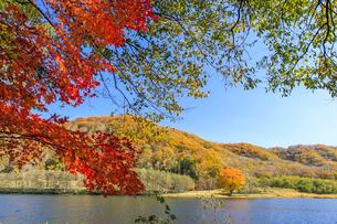 錦秋の十勝川上流の湖の写真素材 [FYI01796537]