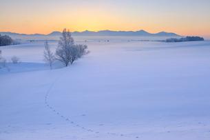 雪原の夜明けの写真素材 [FYI01796555]