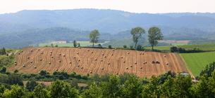 麦わらロールとパフィーの木の写真素材 [FYI01796630]