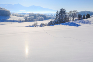 サンピラーの現れた雪原の写真素材 [FYI01796639]